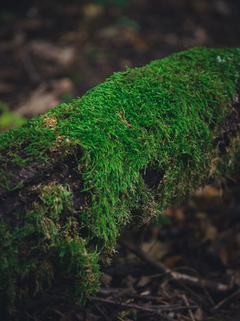 Mossy Beauty In Nature Close-up Day Focus On Foreground Green Color Growth Log Moss Moss-covered Nature No People Outdoors