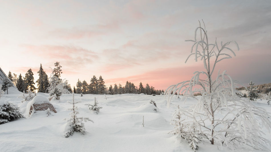 Beauty In Nature Cold Temperature Forest Landscape Nature No People Scenics Sky Snow Sunset Tree Winter