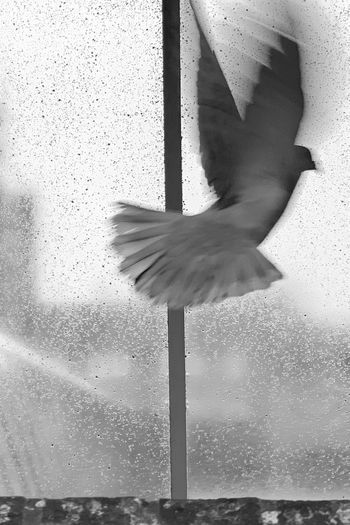 View of seagull flying through glass window