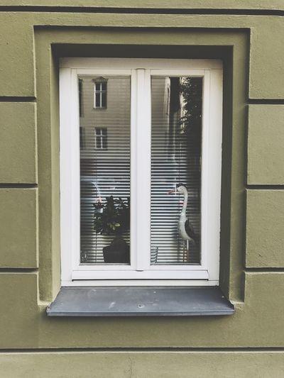 One window in