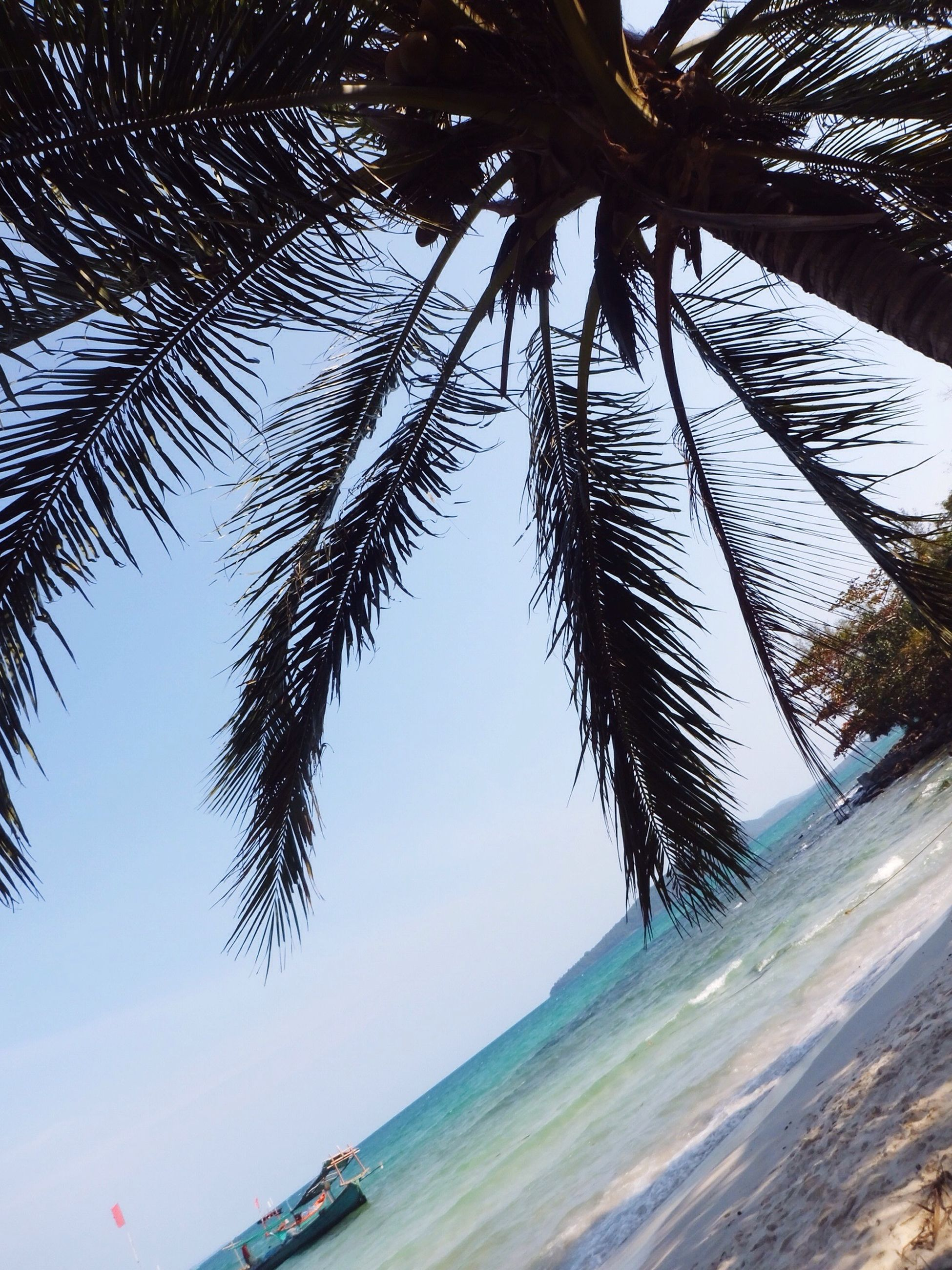 palm tree, tree, tranquility, low angle view, nature, sea, beach, growth, branch, beauty in nature, tree trunk, tranquil scene, sky, scenics, clear sky, coconut palm tree, sunlight, day, outdoors, water