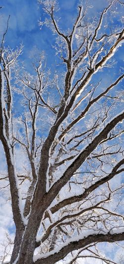 -20c. clear and cold Cold Sky Tree Branch Bare Tree Winter Cold Temperature Snow Blue Plant Part Pinaceae Pine Tree