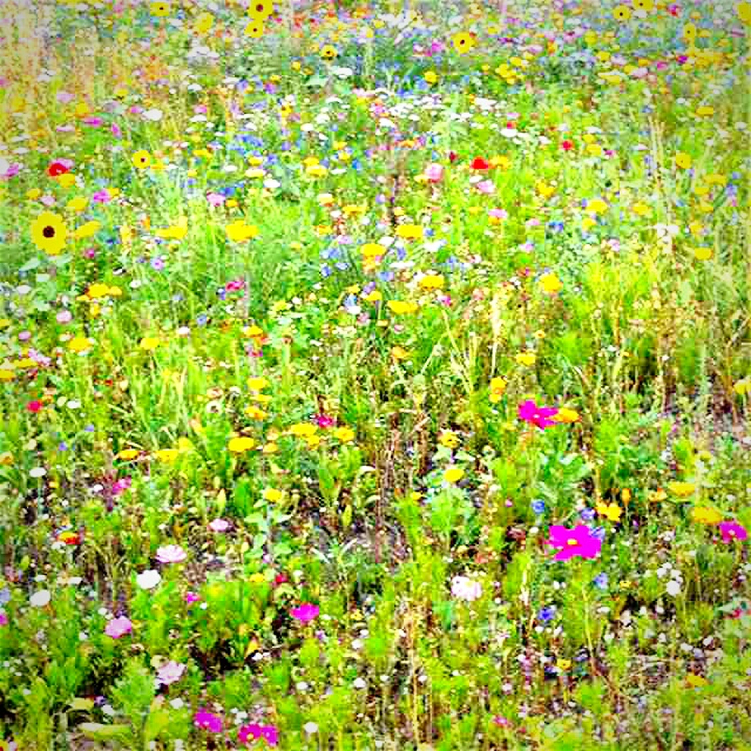 flower, multi colored, freshness, fragility, colorful, growth, beauty in nature, plant, nature, variation, day, wildflower, full frame, petal, springtime, formal garden, flower head, in bloom, outdoors, blooming, flowerbed, tranquility, abundance, no people, vibrant color, green color, various, scenics, bloom, garden