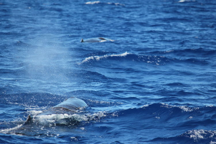 View of whale swimming in sea