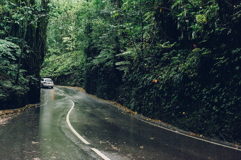 Car On Road Passing Through Forest