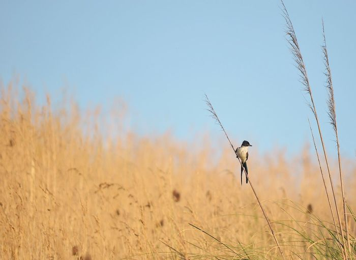 birdy bird The