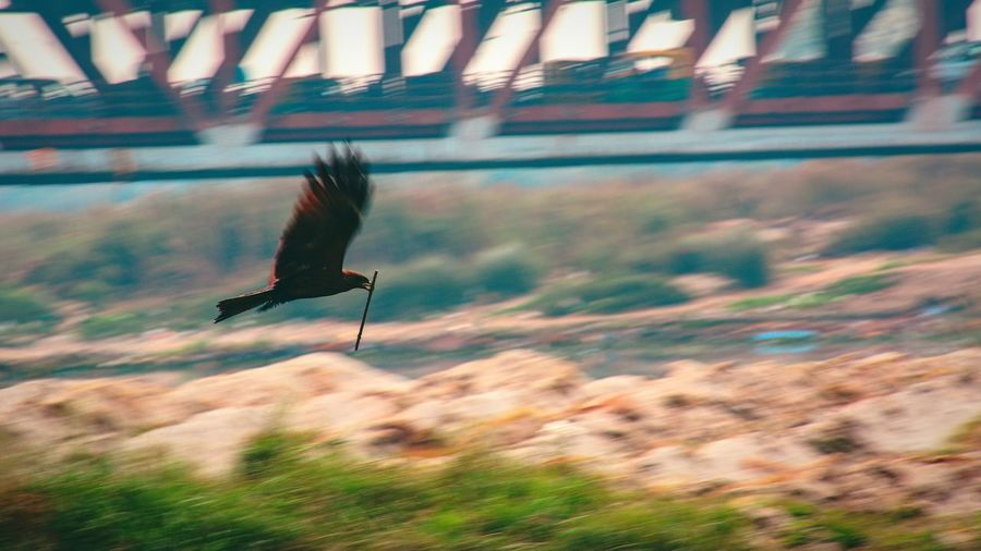 Flying Bird Day Outdoors Animals In The Wild Nature No People Sky Bird Of Prey The Week On EyeEm Nikon D750 Delhi India Beauty In Nature Bueatiful Nature Reserve Wildlife Photography Eagle Sunset Yamuna Bird Photography Birds Of EyeEm  Bird Hunting  Motion Blur Mountain Pet Portraits EyeEmNewHere