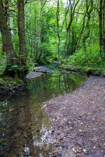 Wigan Hindley Borsdane Woods WoodLand Woods