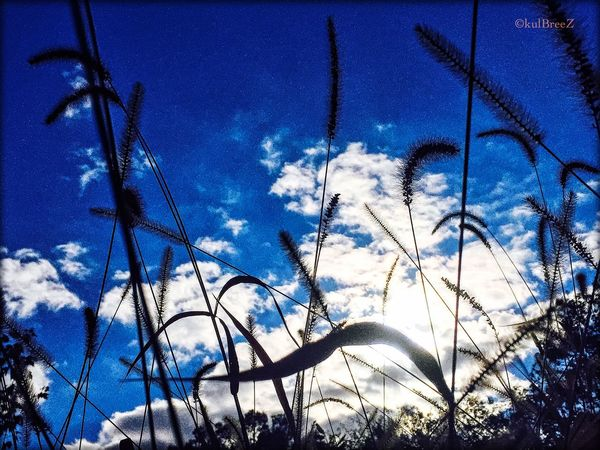 Deep afternoon Light And Shadow Wind StreamzooVille My Love Life Mother Earth Capture The Moment Father Sky Night