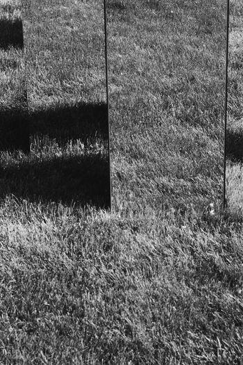 Full frame shot of field