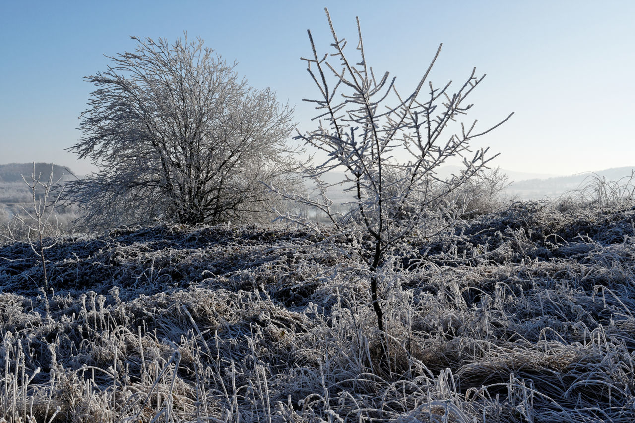 winter, cold temperature, snow, nature, bare tree, tranquility, beauty in nature, tranquil scene, no people, landscape, outdoors, tree, day, frozen, scenics, branch, clear sky, sky