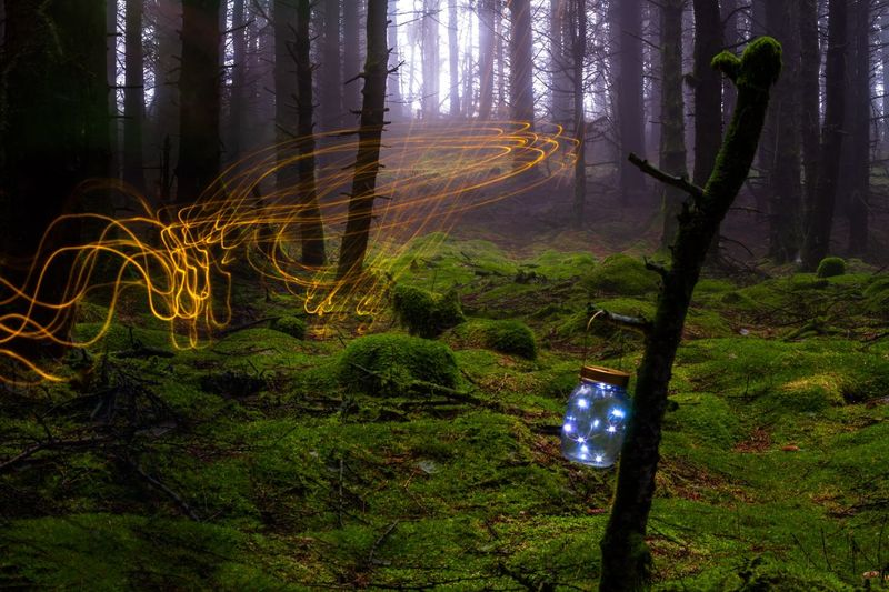 Cringle Plantation Tree Night Illuminated Plant Land Trunk Tree Trunk Glowing Nature No People Growth Green Color Long Exposure Outdoors Forest Field Creativity Art And Craft Light - Natural Phenomenon HUAWEI Photo Award: After Dark HUAWEI Photo Award: After Dark