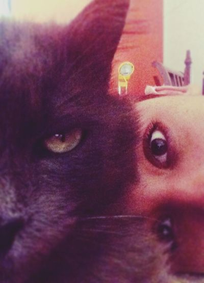 Selfiewithcat That's Me Likers Photo♡