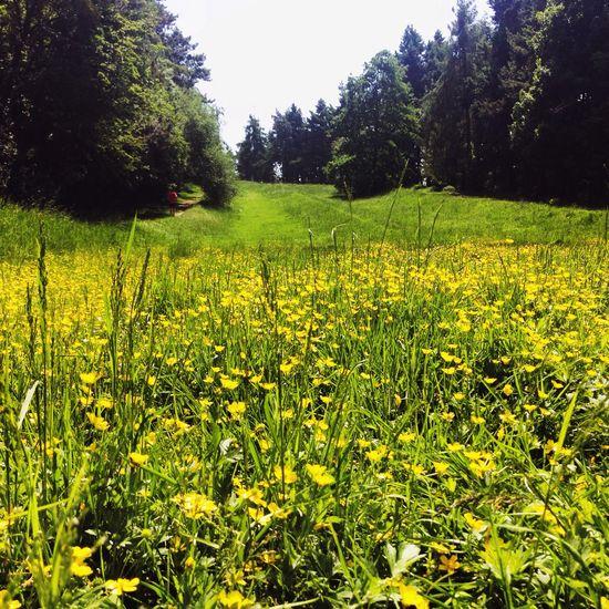 yellow ... Eye Em Nature Lover EyeEm Best Shots Earth Nature