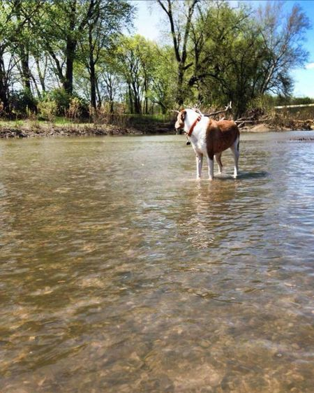 One Animal Animal Themes No People Domestic Animals Water Outdoors Dog Puppy Doglifestyle Dogslife Deer Creek Ohio, USA View Pets Bullybreed Pitbull Sweet Dog  Water Dog Water Surface Trees