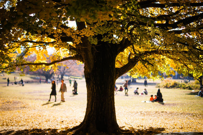 People relaxing in park during autumn