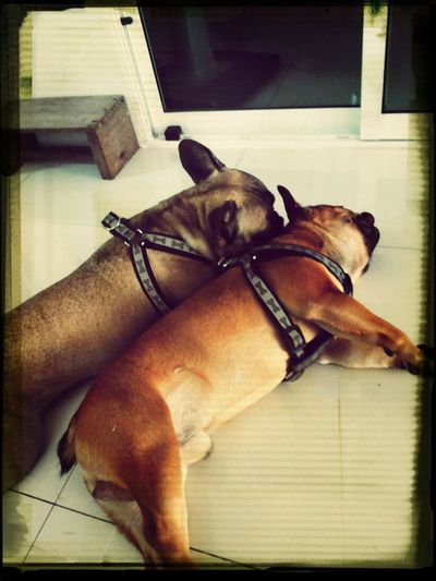 They're cute and fat aren't they ♥ I Love My Dog