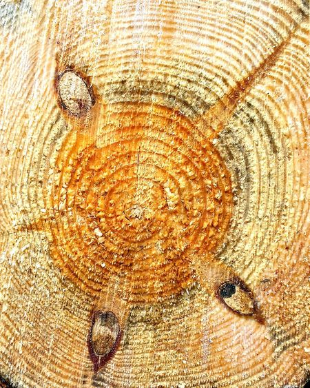 Wood Trunk Wooden Texture Wood Jahresringe Ladyphotographerofthemonth Showcase: November STAR☆ Wooden Wood You? Wooden Structure Wooden Collection Close Up Tree Rings Annual Ring Macro Beauty