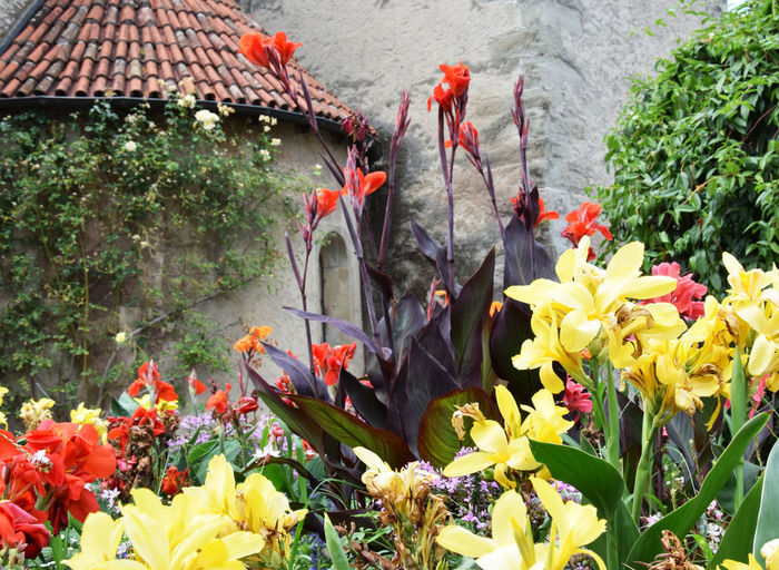 Flowering plants growing by church