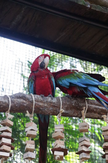 Low angle view of parrot perching in cage at zoo