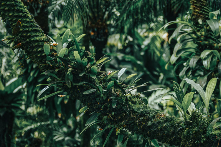 Full frame shot of various plants in forest