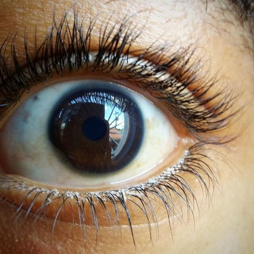 Eyeball Eyesight Human Body Part Human Eye Iris - Eye Looking At Camera Portrait Vision First Eyeem Photo