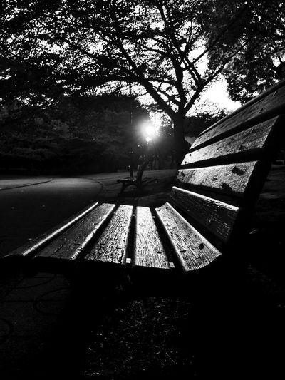 Sunset Bw_collection Blackandwhite Park