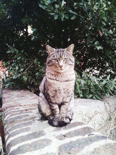 Cat Serious Eyem Best Shots Catoftheday Catsagram Felinelover Tiger Cat Grey Cat Miao Cat♡