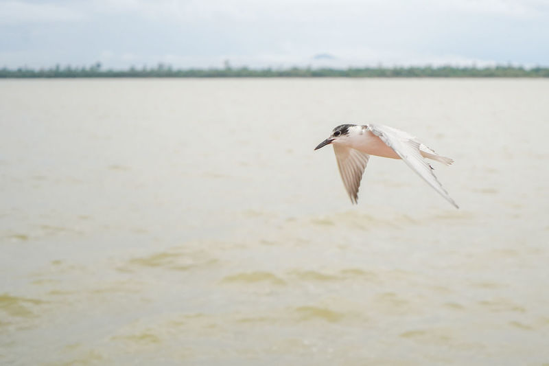 Seagull flying over a sea