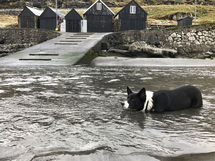 This is my stream! Pets Dog Doginwater Lovingwinter