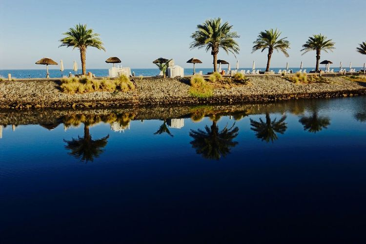Reflection of palm trees on water at the cove rotana resort