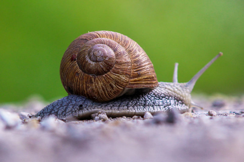 on the road again Croatia Croatia ❤ Croatiafulloflife Croatia ♡ Canonphotography Side View Gastropod Snail Living Organism Close-up Animal Themes Crawling Animal Antenna Animal Shell
