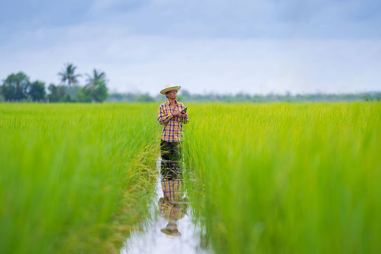 Man using digital tablet while standing in rice paddy
