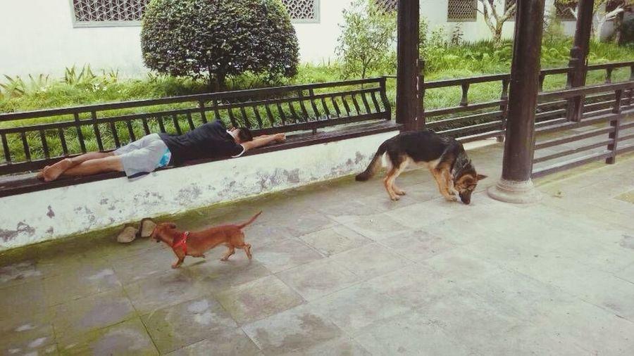 Travel Dogs Cozy