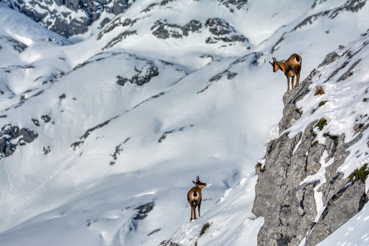 View of horse on snow covered mountain