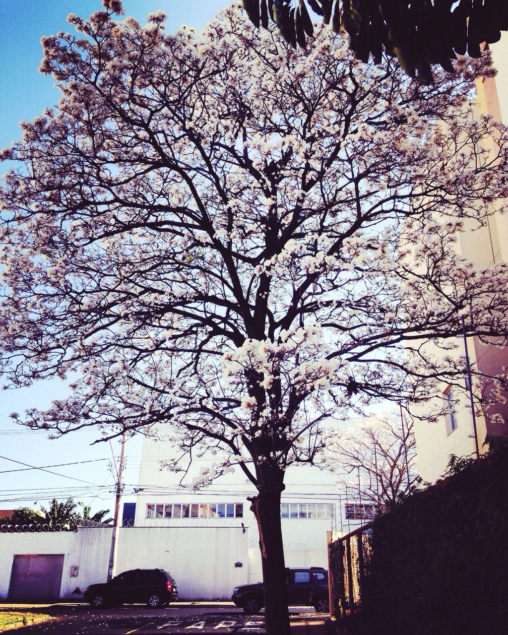 tree, no people, branch, outdoors, architecture, car, day, built structure, building exterior, city, land vehicle, nature, sky, road, growth, flower, beauty in nature, close-up