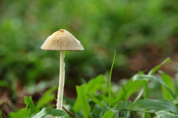 Mushroom Fungus