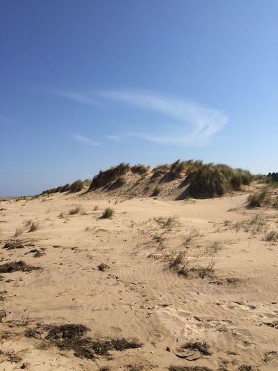 Sunshine Beach Sanddunes No Edit/no Filter