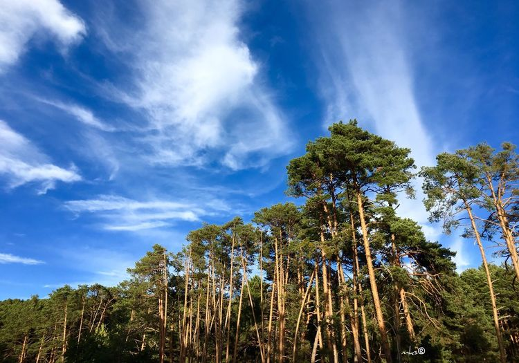 Tree Beauty In Nature Sky Cloud Nature Taking Photos Enjoying The View EyeEm Best Shots 2016 EyeEm Awards Scenics Landscape Landscape_Collection Landscape_photography Eye4photography  Nature_collection