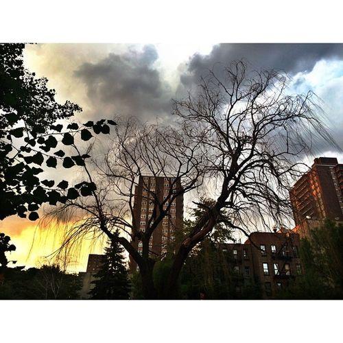 ⛅️ Sunset Eastvillage Nature NYC