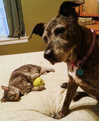 Dog Love Cat Content Relaxing