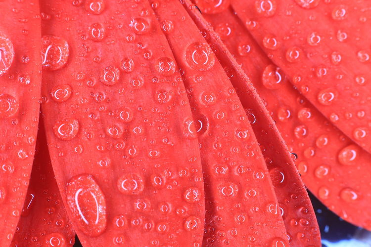 Full frame shot of water drops on red leaf