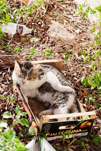 Homeless cat Stray Cat Ferral Cats Pets Feline Animal Themes Mammal One Animal Cat No People Outdoors