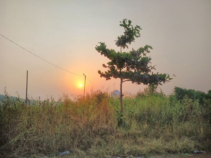 New Here ;) Trees Tree Rural Scene Sunset Fog Field Agriculture Sky Grass Landscape
