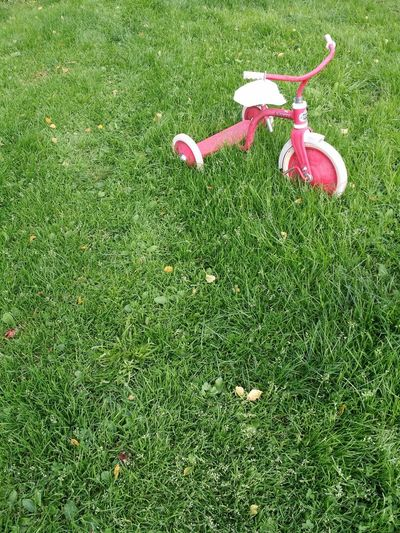 Old Kids Bike Green Summertime Old Tricycle Green Grass Red Bike