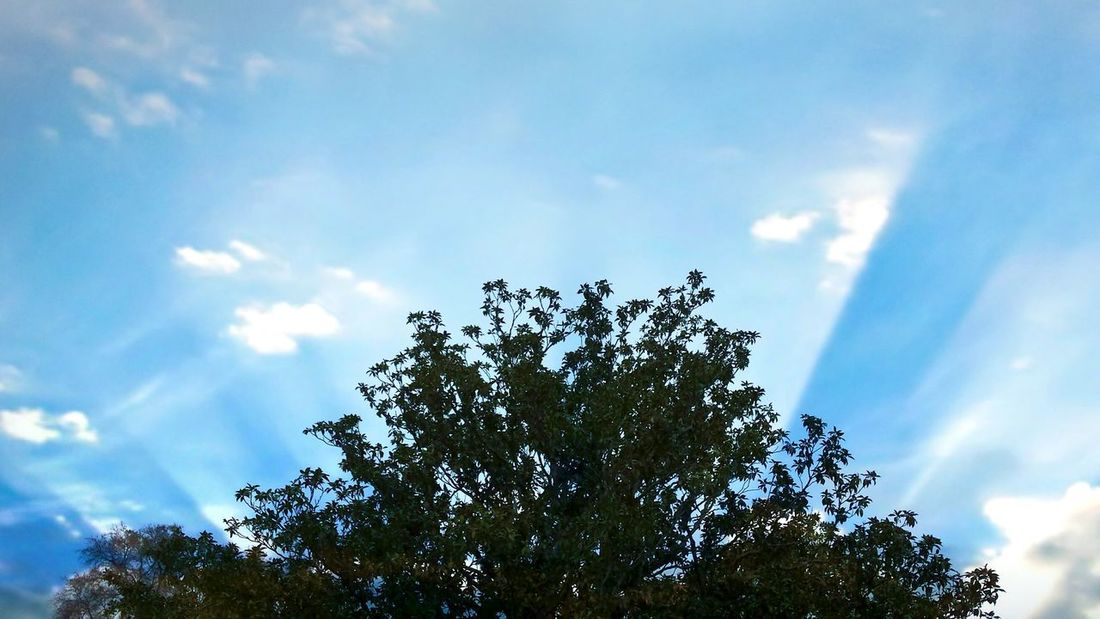 Light Tree Sky Low Angle View Nature Growth Beauty In Nature Cloud - Sky No People Tranquility Day Outdoors Blue Scenics