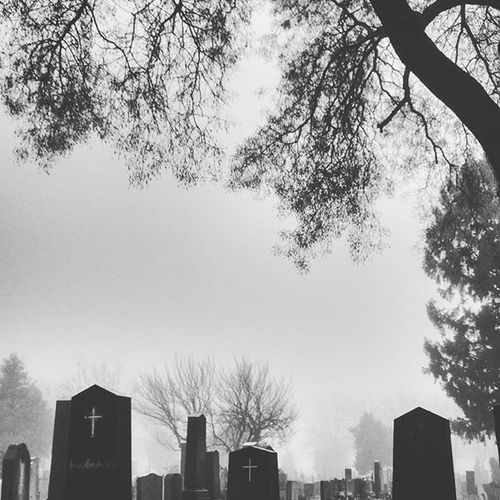 We could be heroes, just for one day... (Sad day) 'Cause we're lovers, and that is a fact Yes we're lovers, and that is that! Cemetery Vienna Wien Fog Austria Österreich Bw Igs_world Europe Ig_europe Davidbowie