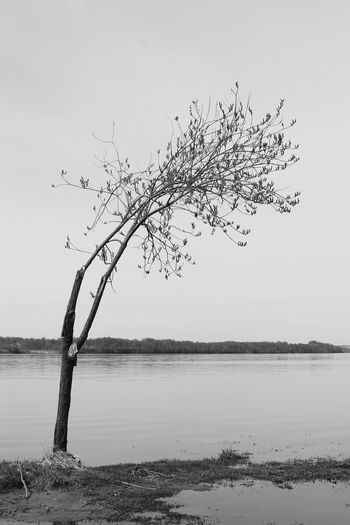 Beauty In Nature Tree Blackandwhite Minimalism
