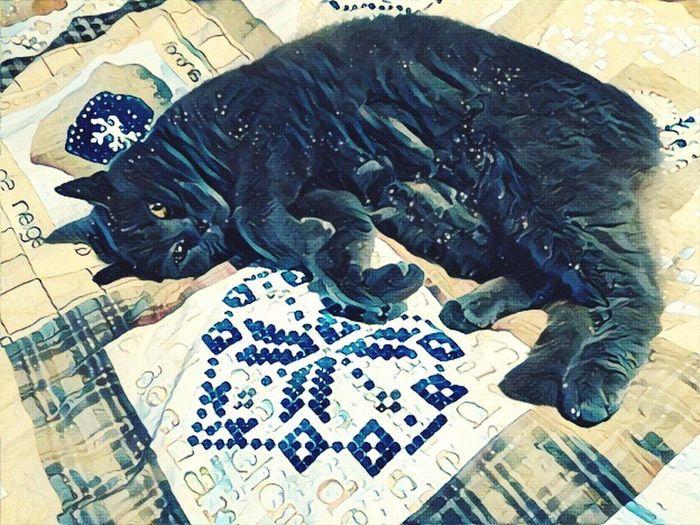 High Angle View Animal Themes Bedroom Mammal Pets