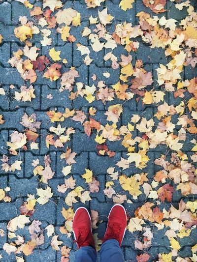 Low Section Of Person Standing By Fallen Autumn Leaves On Street